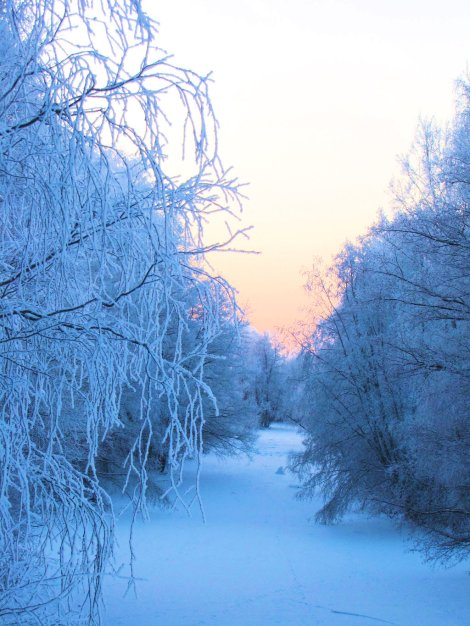 bg_winter_stock_by_shinystocks-d35u7mp