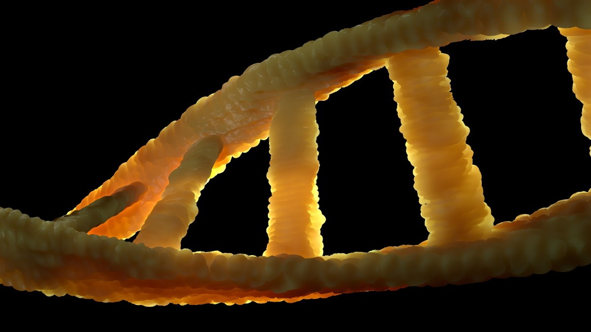 importance genetics What is genetic diversity how is diversity created in the process of inheritance, nucleotides (although not always whole genes) are shuffled and recombined to form.