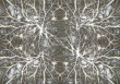 neurons-582050_1920